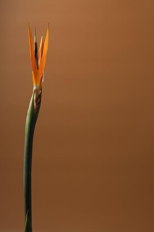 Immagine gratuita di arte, artistico, astratto, bel fiore