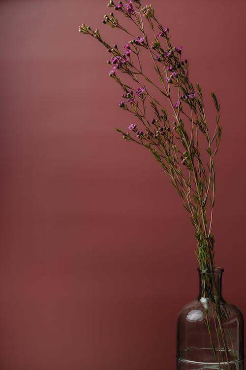 Immagine gratuita di amore, arte, bouquet, buccia