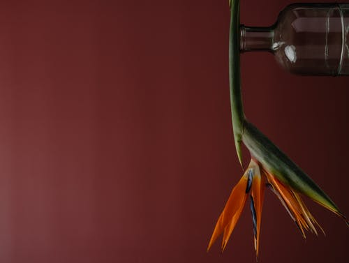 Immagine gratuita di amore, arancia, arancione, bel fiore