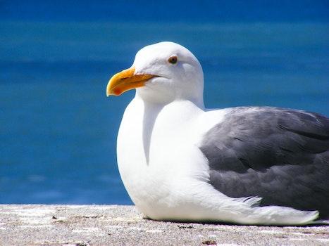 White and Black Bird on Grey Pavement Near Water