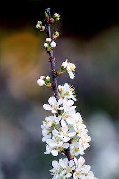 White Petaled Flower Photography