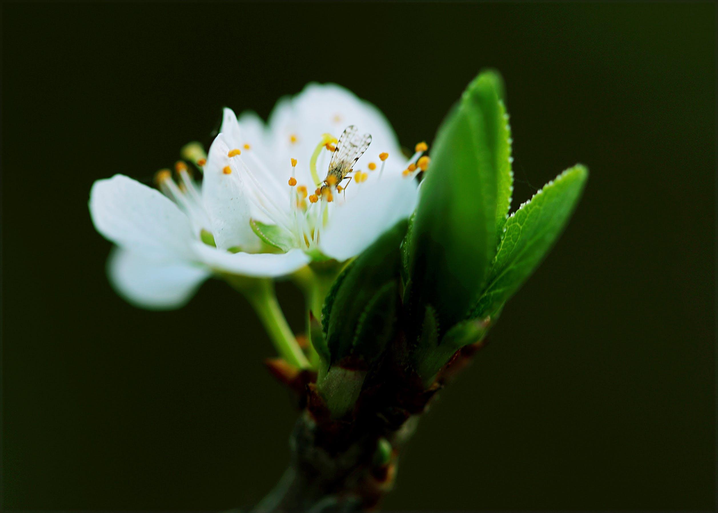 Gratis lagerfoto af blomst, blomster, close-up, flora