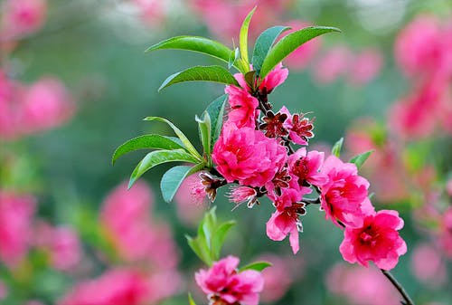 Gratis lagerfoto af blomst, blomster, flora, have