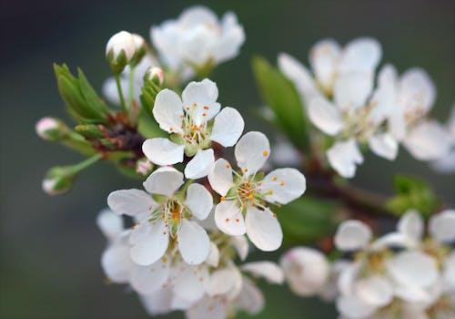 가지, 계절, 꽃, 꽃봉오리의 무료 스톡 사진