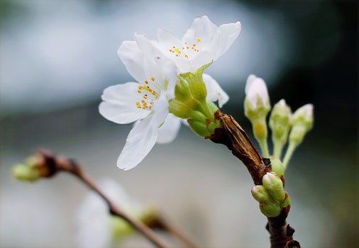 Selective Focus Of White Clustered Flowers