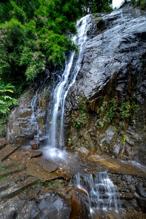 Rapid stream of clean foamy water falling from rocky slope under branches of plant covered with green foliage