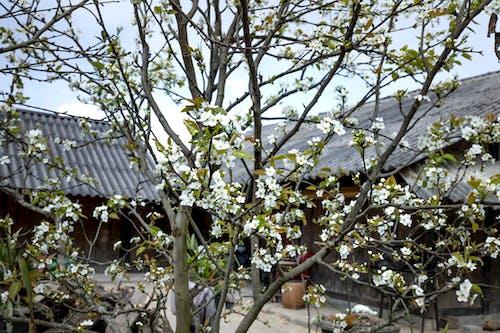Foto d'estoc gratuïta de a l'aire lliure, abundància, arbre