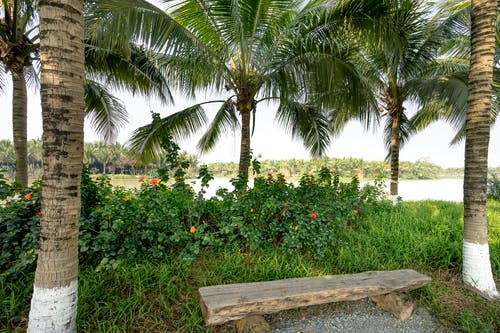 Scenery of shabby wooden bench between lush palms on grassy lush river bank in summer park
