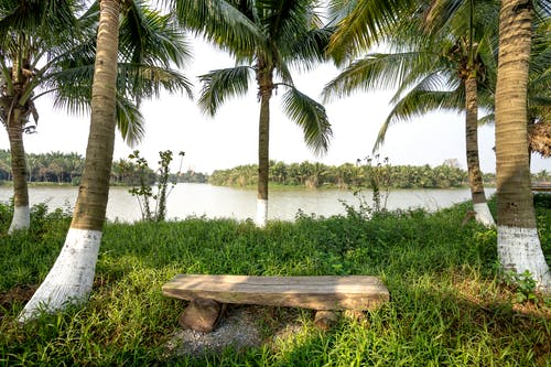 Scenery of shabby wooden bench between verdant tropical palms on grassy river bank in summer nature