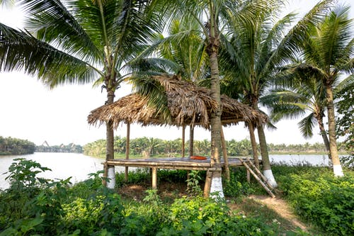 Wooden arbor with hay roof between abundant palms located on grassy river bank in tropical countryside