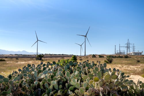 Wind mills on land against cacti in countryside