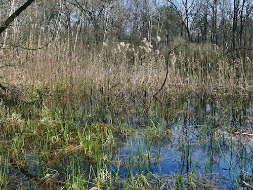 Free stock photo of swamp