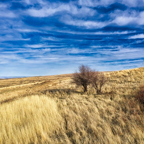 Dry grass growing on field with small bush against blue sky with clouds in autumn day in countryside in nature