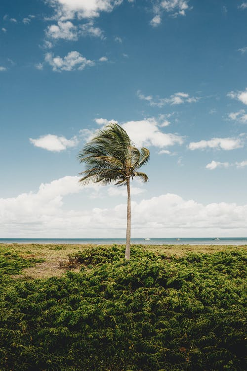 Lonely palm tree on grassland against sea in summer