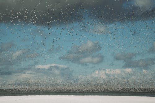 Huge flock of wild seagulls soaring over sea with snowy coast against blue sky with clouds in winter day