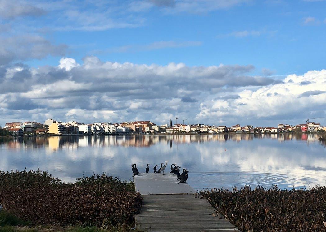 Foto profissional grátis de águas calmas, águas tranquilas, lagoas lindos pássaros