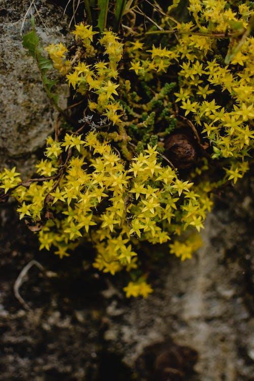 Fotobanka sbezplatnými fotkami na tému fotografie rastlín, kamene, kvety