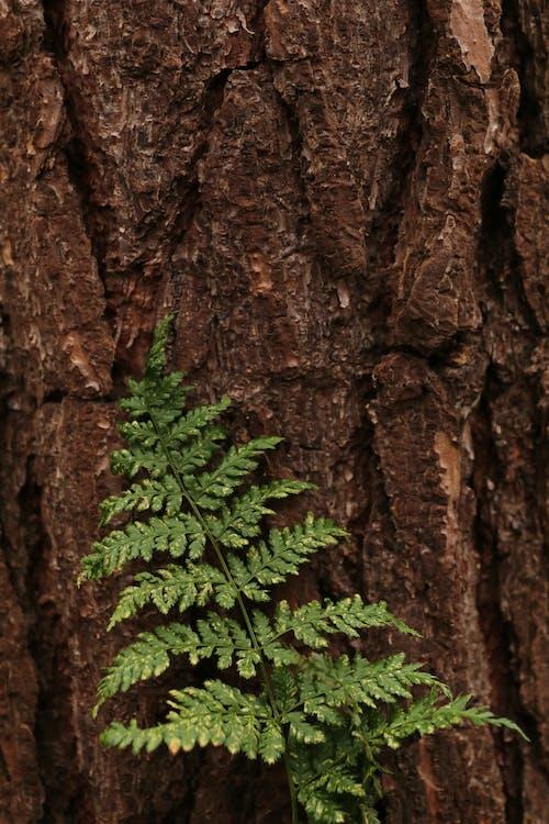 Fotos de stock gratuitas de árbol, helecho verde