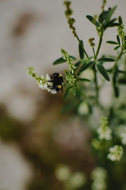 A Bee Feeding on a Flower Nectar