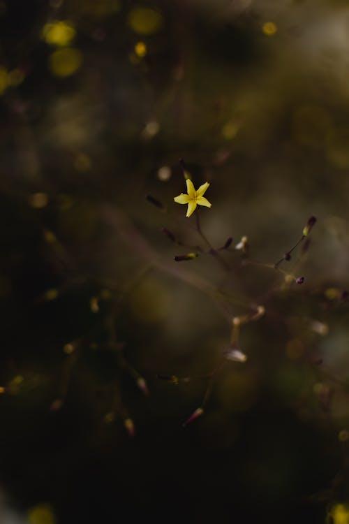 Ảnh lưu trữ miễn phí về bắn dọc, cận cảnh, cánh hoa