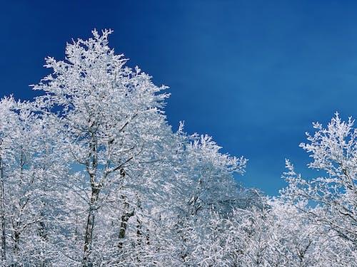 Free stock photo of beautiful, blue, blue sky