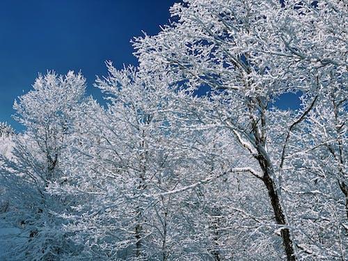 Free stock photo of beautiful, blue sky, clear blue sky