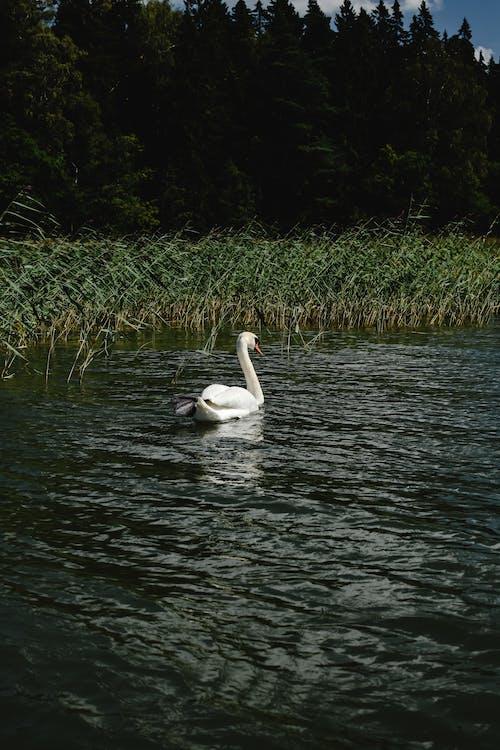 Základová fotografie zdarma na téma divočina, fauna, fotografování zvířat