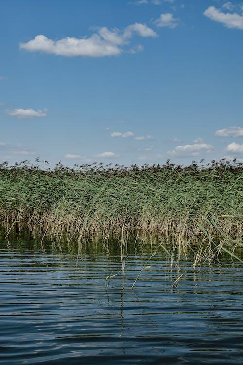 Grünes Gras Auf Wasser