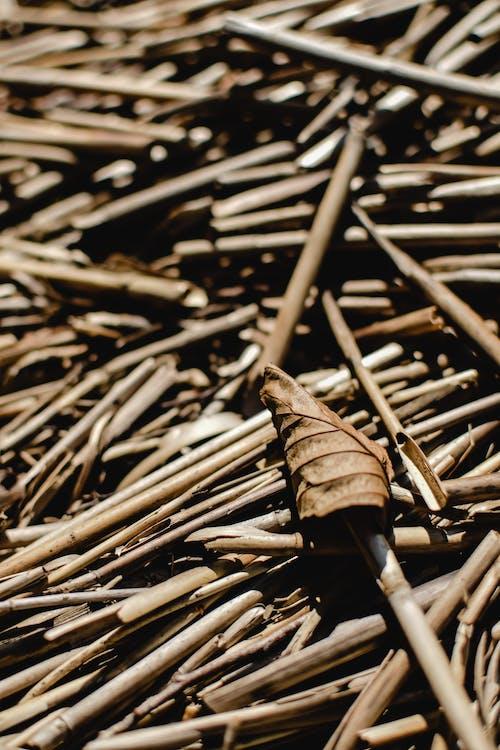 Darmowe zdjęcie z galerii z architektura, bambus, brązowy liść