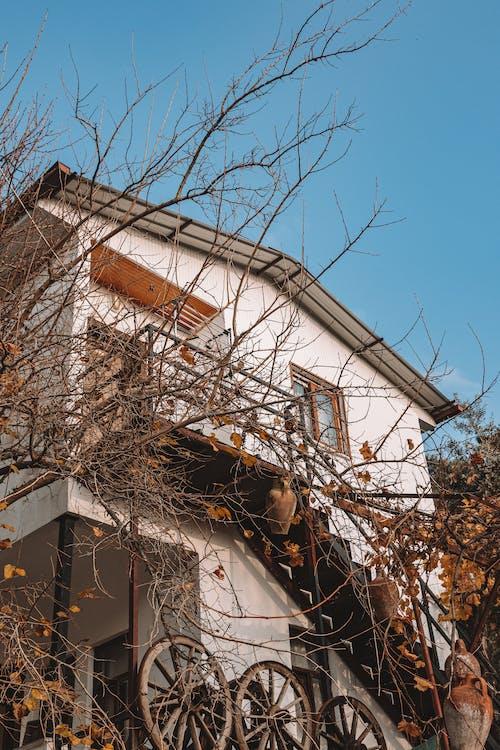 Photos gratuites de arbre sans feuilles, automne, bâtiment