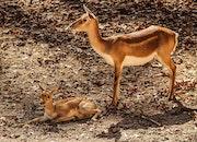 nature, animal, wildlife