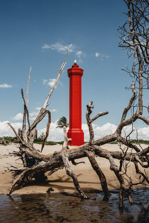 Aged dry tree placed on sandy beach on coast against bright red lighthouse located in Coroa Vermelha island in sunny day