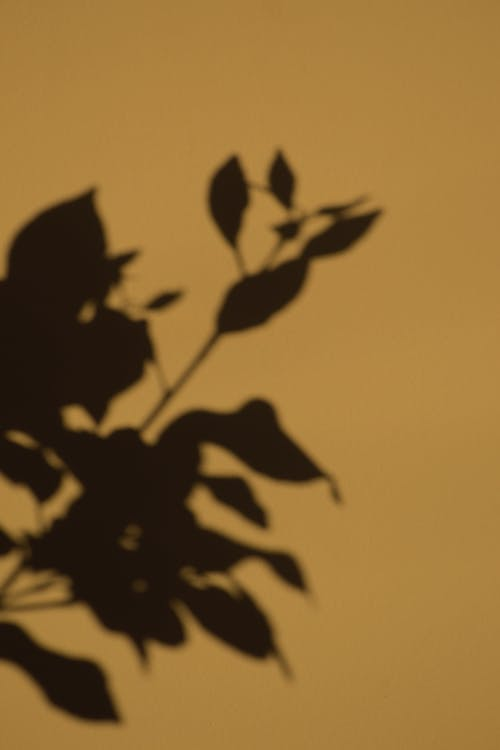 Shadow of plant with leaves of thin stem
