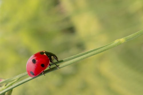 Lady Bug on a Green Plant
