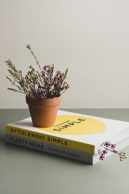 Yellow and Blue Book Beside Brown Potted Plant