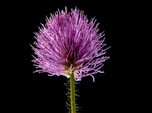 Gratis arkivbilde med blomst, blomstre, flora, HD-bakgrunnsbilde