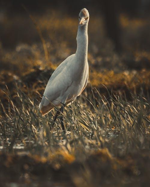 Free stock photo of beautiful nature, bird, bird feeder