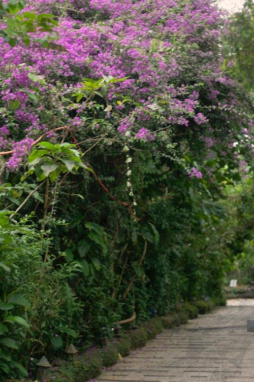 Free stock photo of evergreen, flower garden, garden flowers