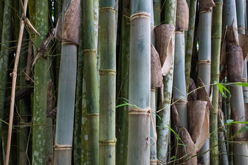 Free stock photo of bamboo, exotic, force
