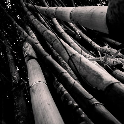 Free stock photo of bamboo, black, blackandwhite
