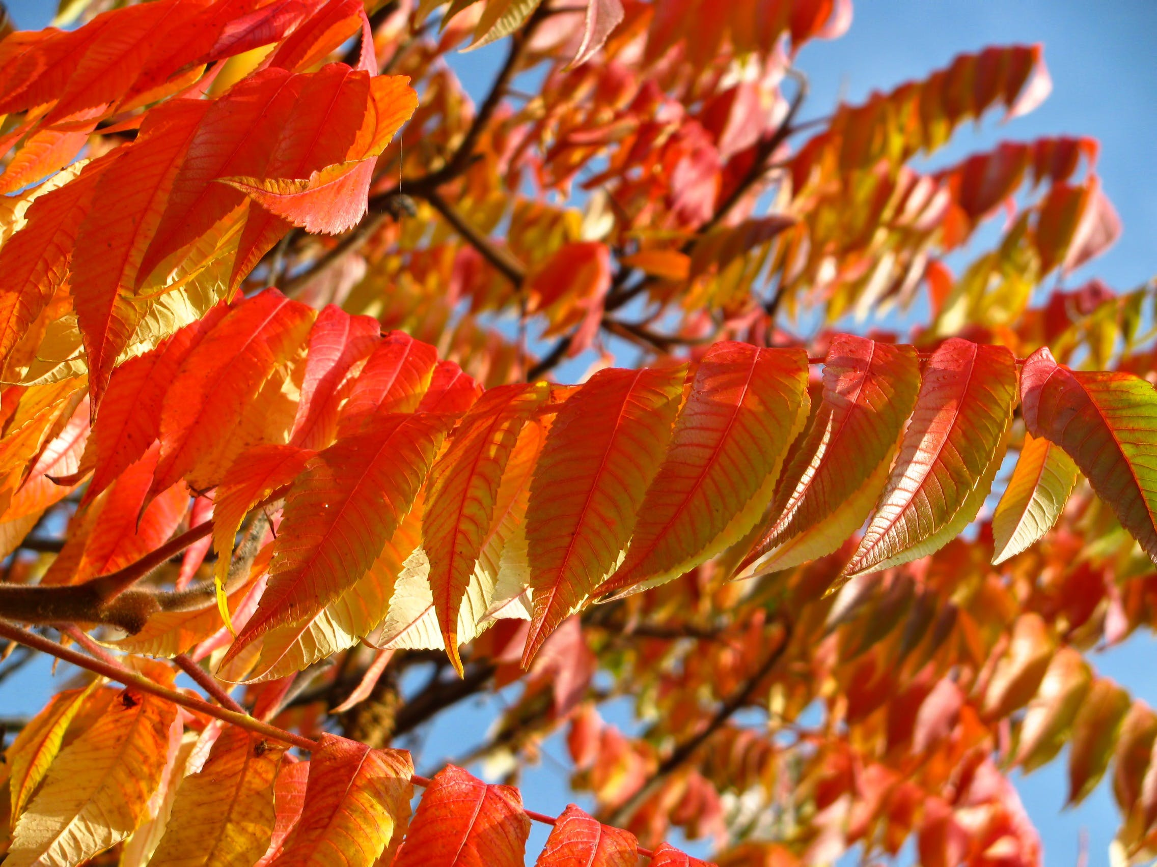 Orange and Yellow Leaves on a Tree