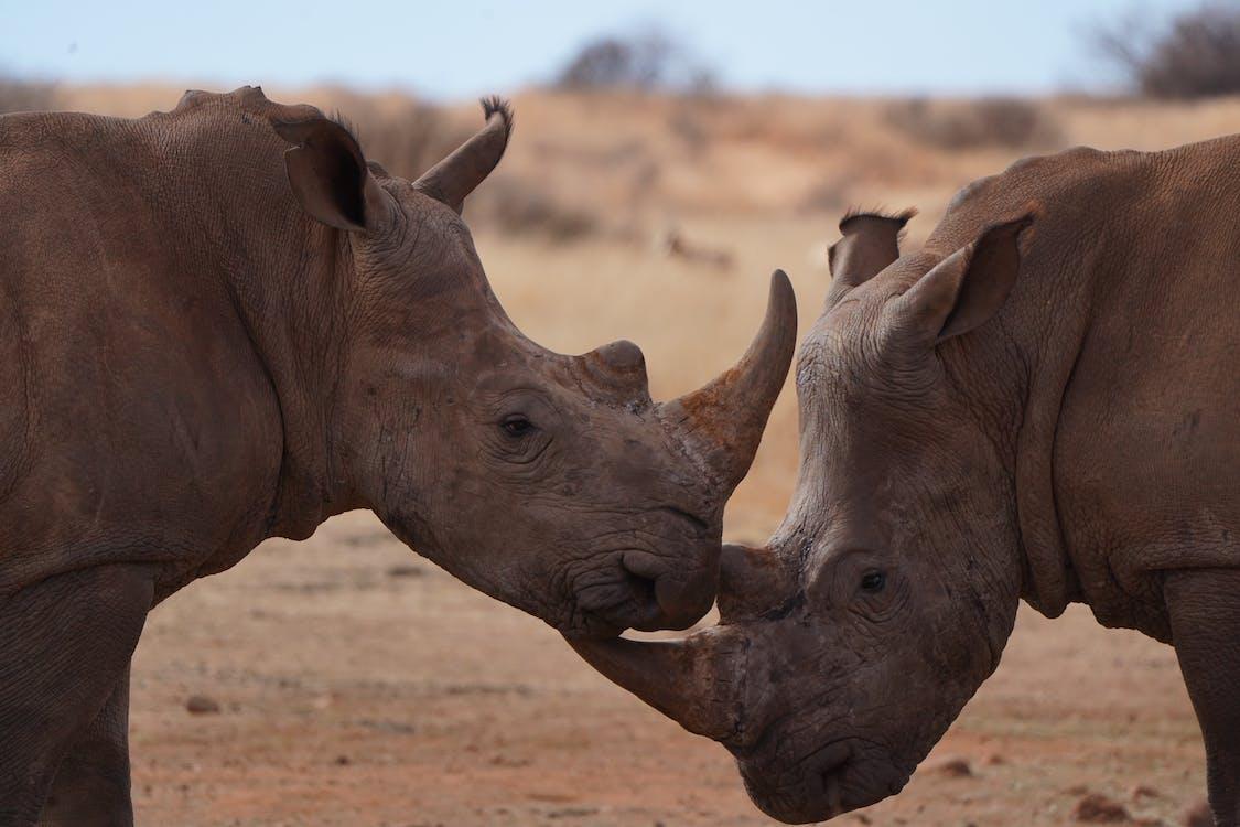 Close-up Photo of Rhinoceros