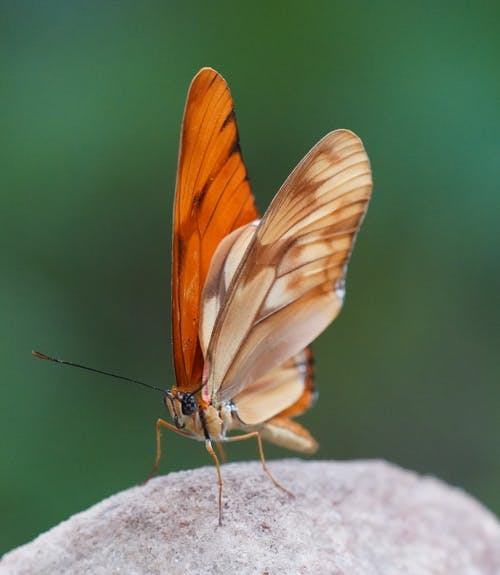 Macro Photography of an Orange Butterfly
