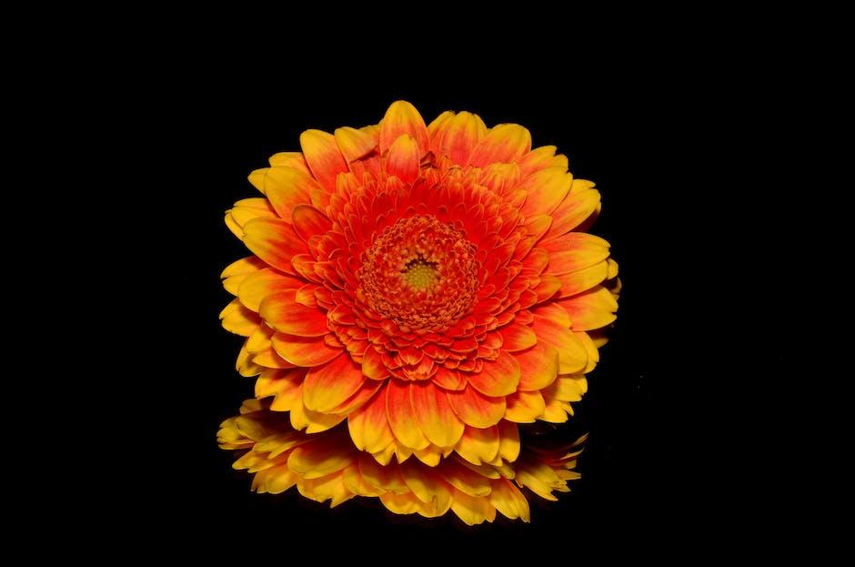 Autumn orange flower
