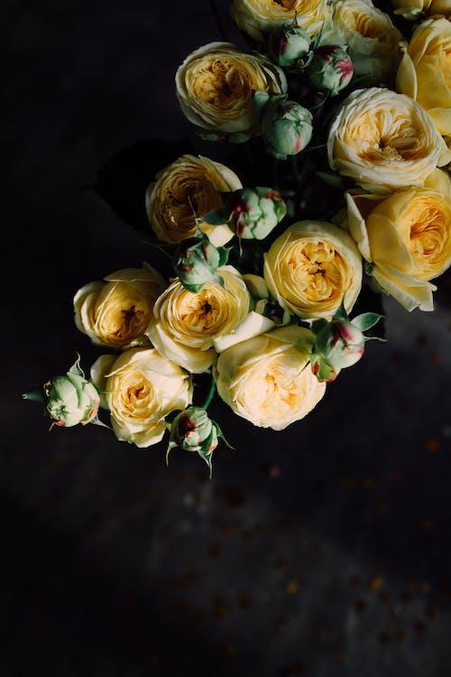 婚禮, 愛, 插花, 植物群 的 免費圖庫相片