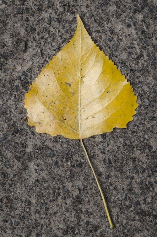 가을, 가을 기분, 가을 색의 무료 스톡 사진