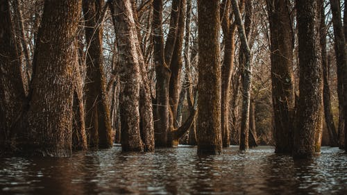 Tree trunks in lake water in autumn forest