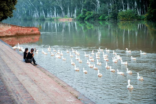 Free stock photo of india