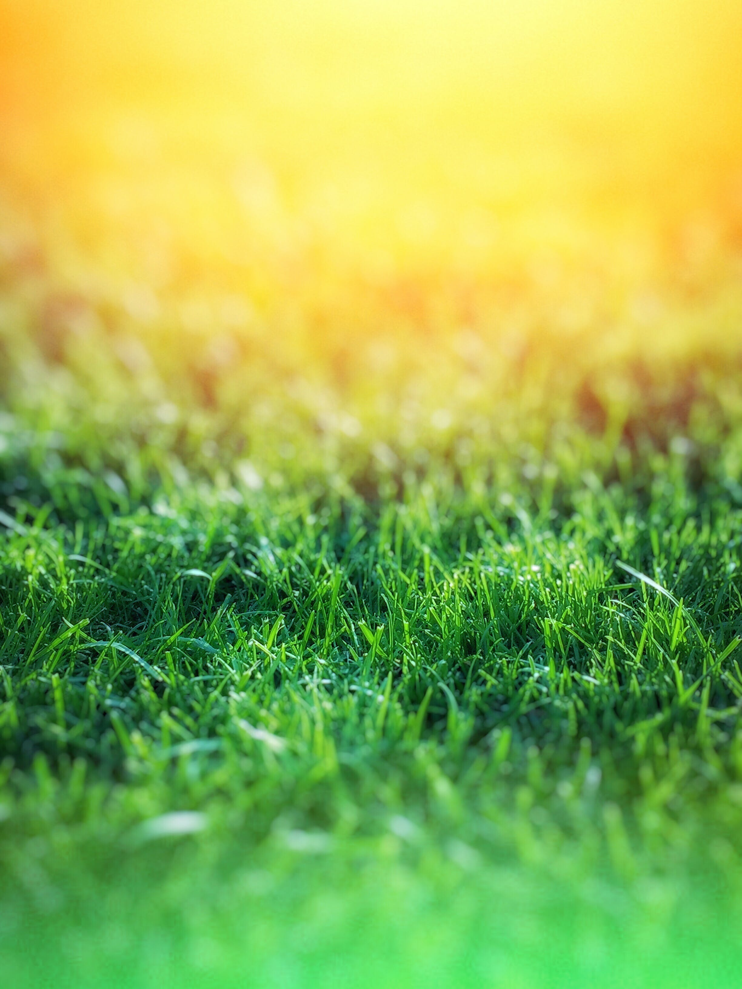 Green Grass over Yellow Background