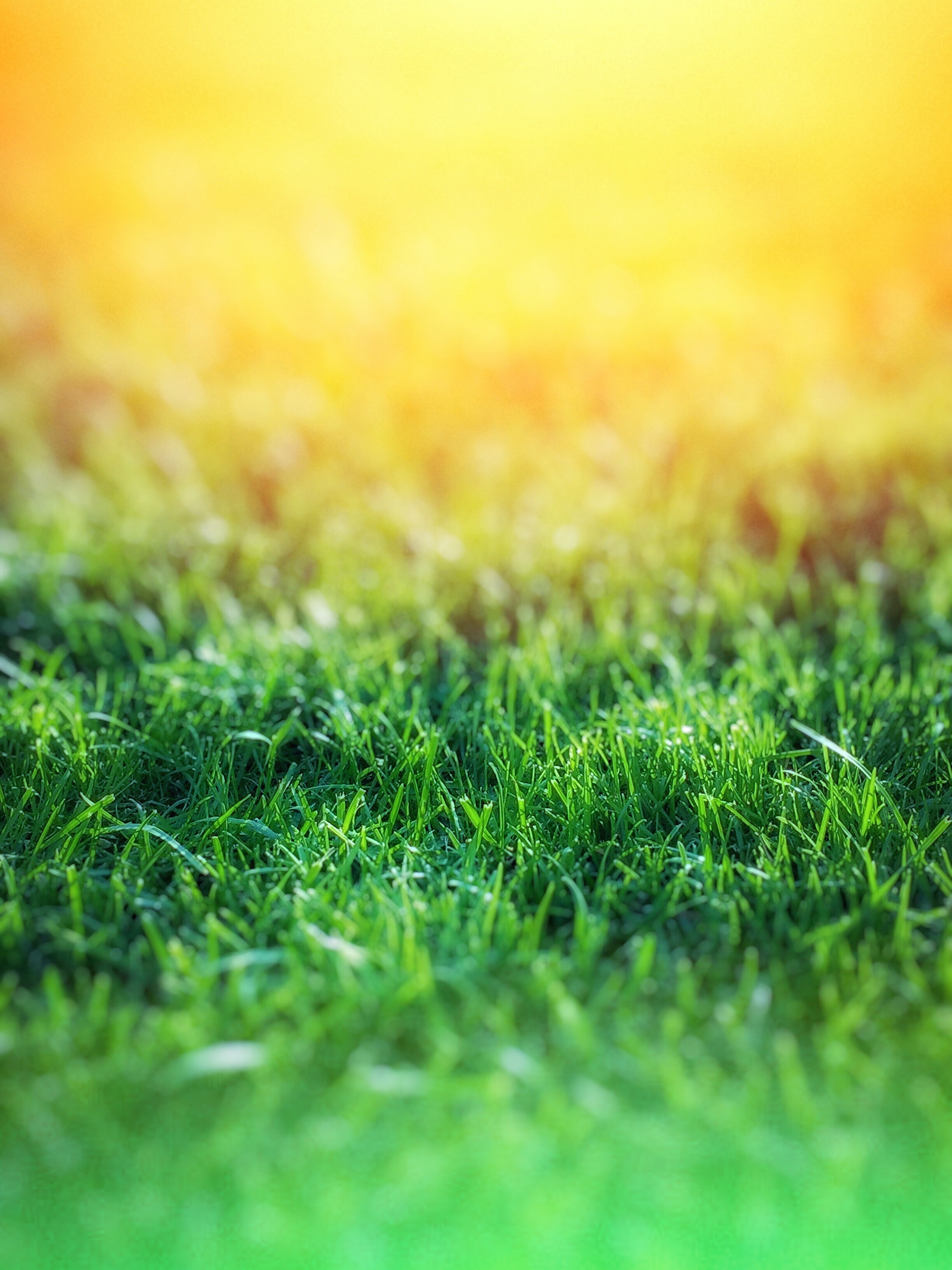 Green Grass Over Yellow Background Free Stock Photo